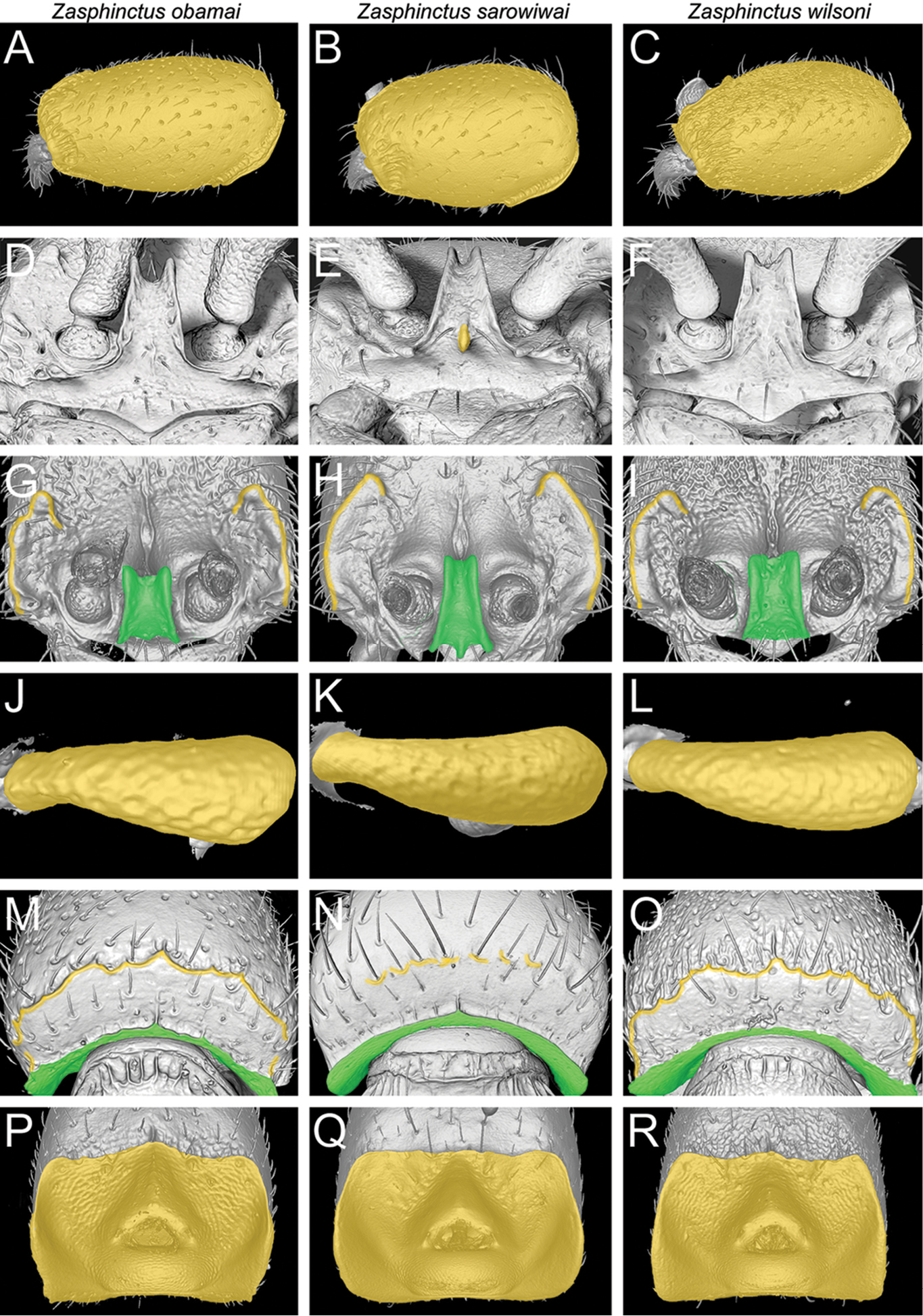 Next-generation morphological character discovery and