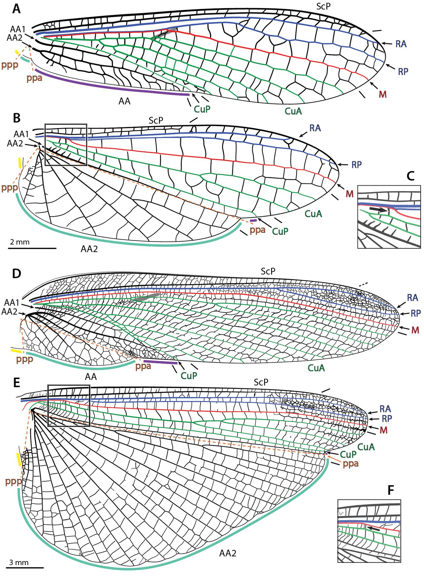 Manual of praying mantis morphology, nomenclature, and