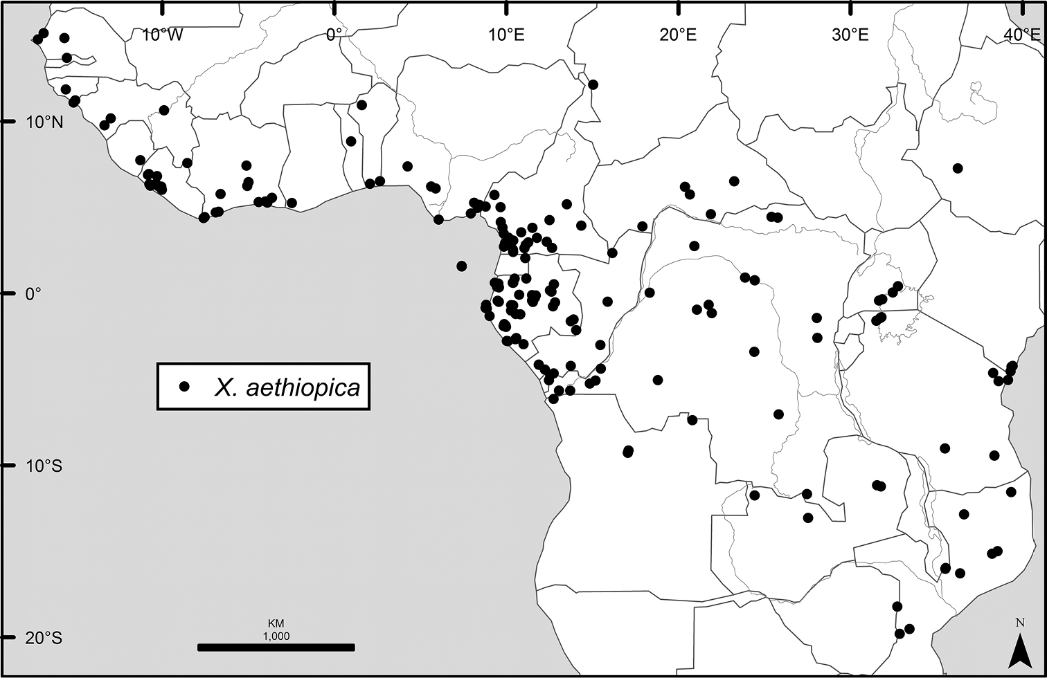 A revision of Xylopia L  (Annonaceae): the species of Tropical Africa