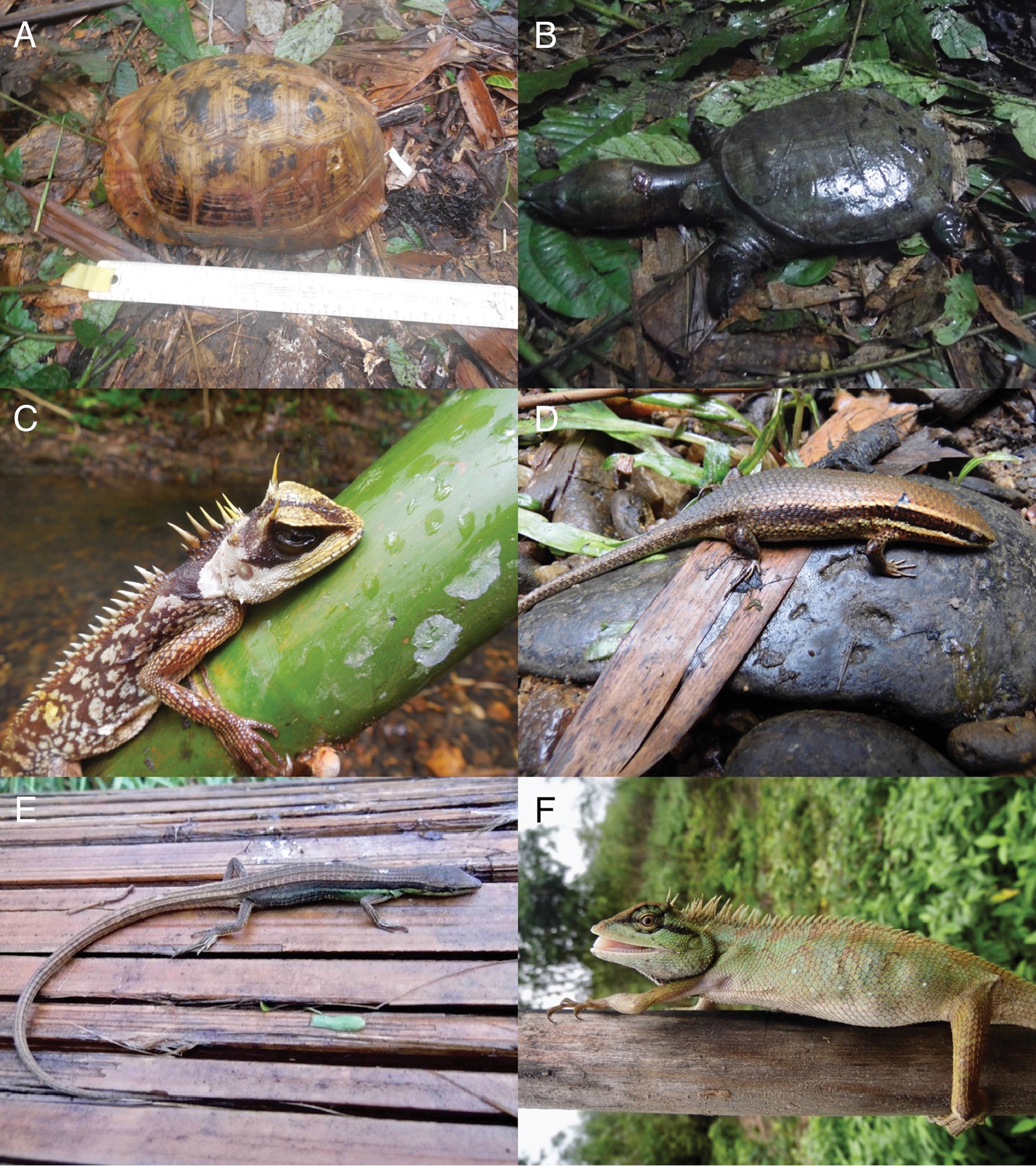 Filling The Bins Of Life Report Of An Amphibian And Reptile