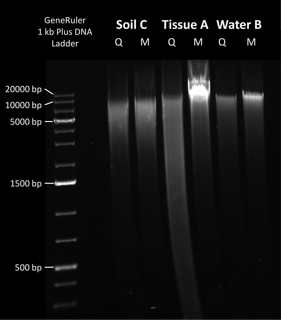 Mu-DNA: a modular universal DNA extraction method adaptable