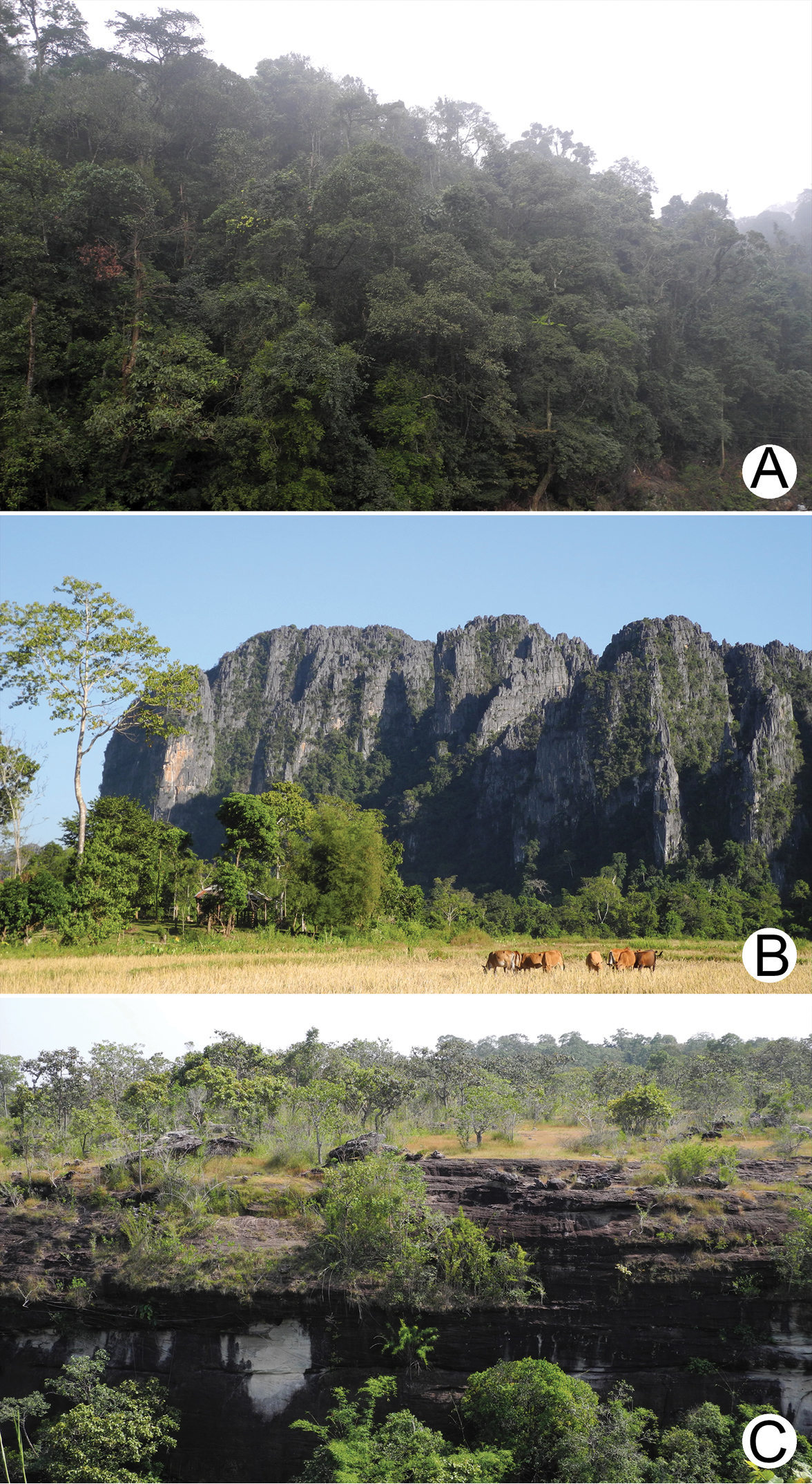 Annotated checklist of the terrestrial molluscs from Laos (Mollusca