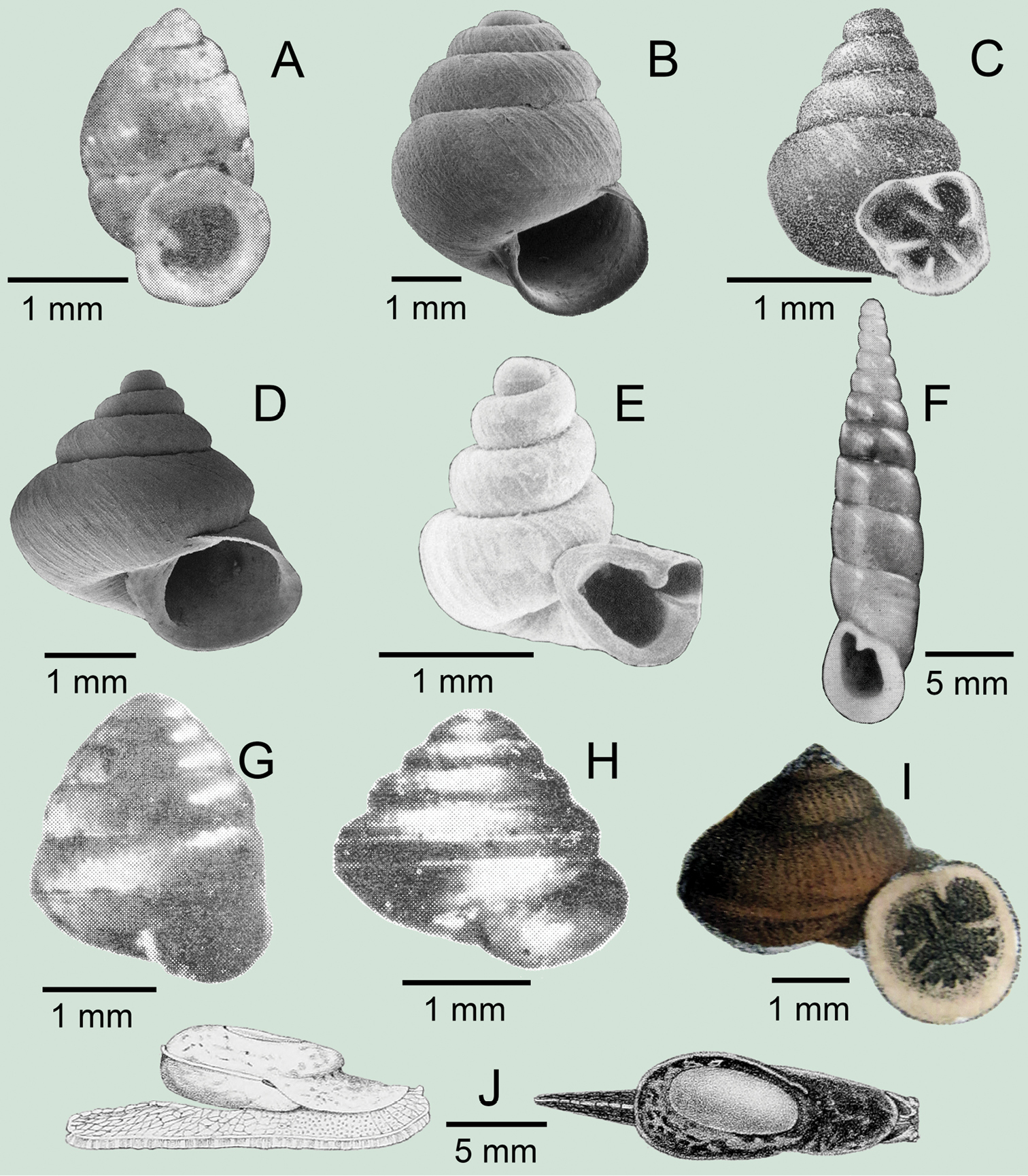 Annotated checklist of the terrestrial molluscs from Laos