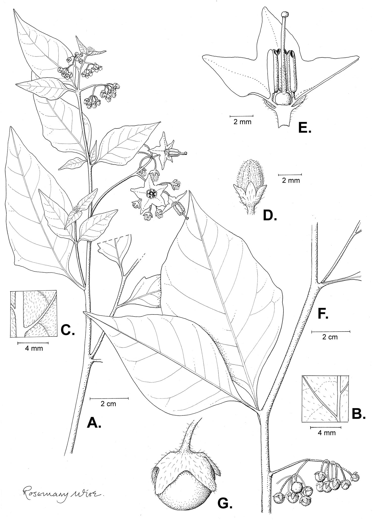 alex und flora, ihr sex kunst