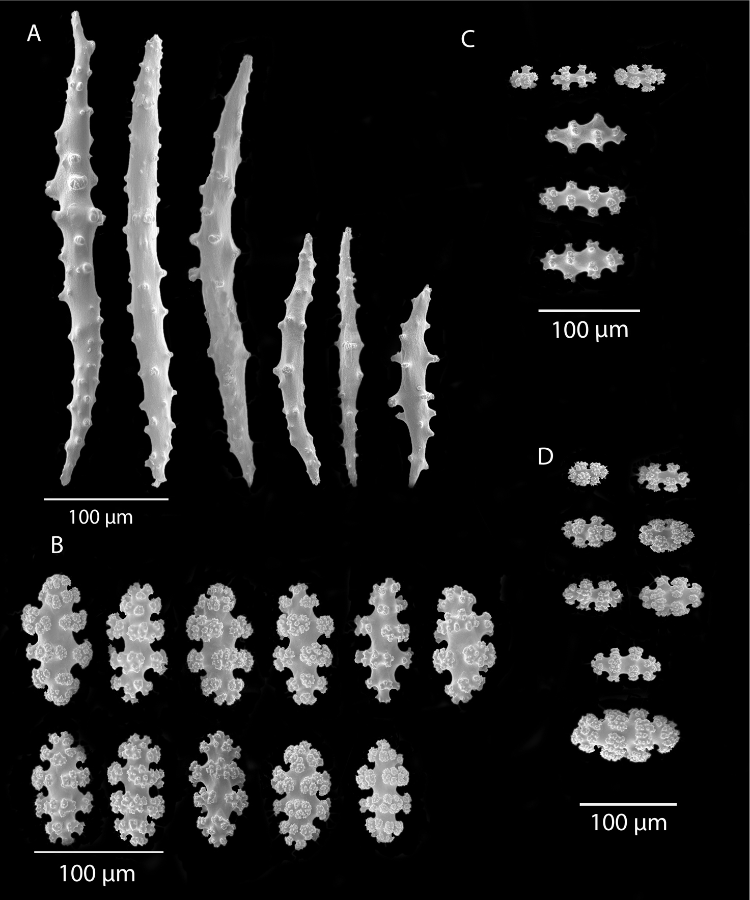 A review of gorgonian coral species (Cnidaria, Octocorallia