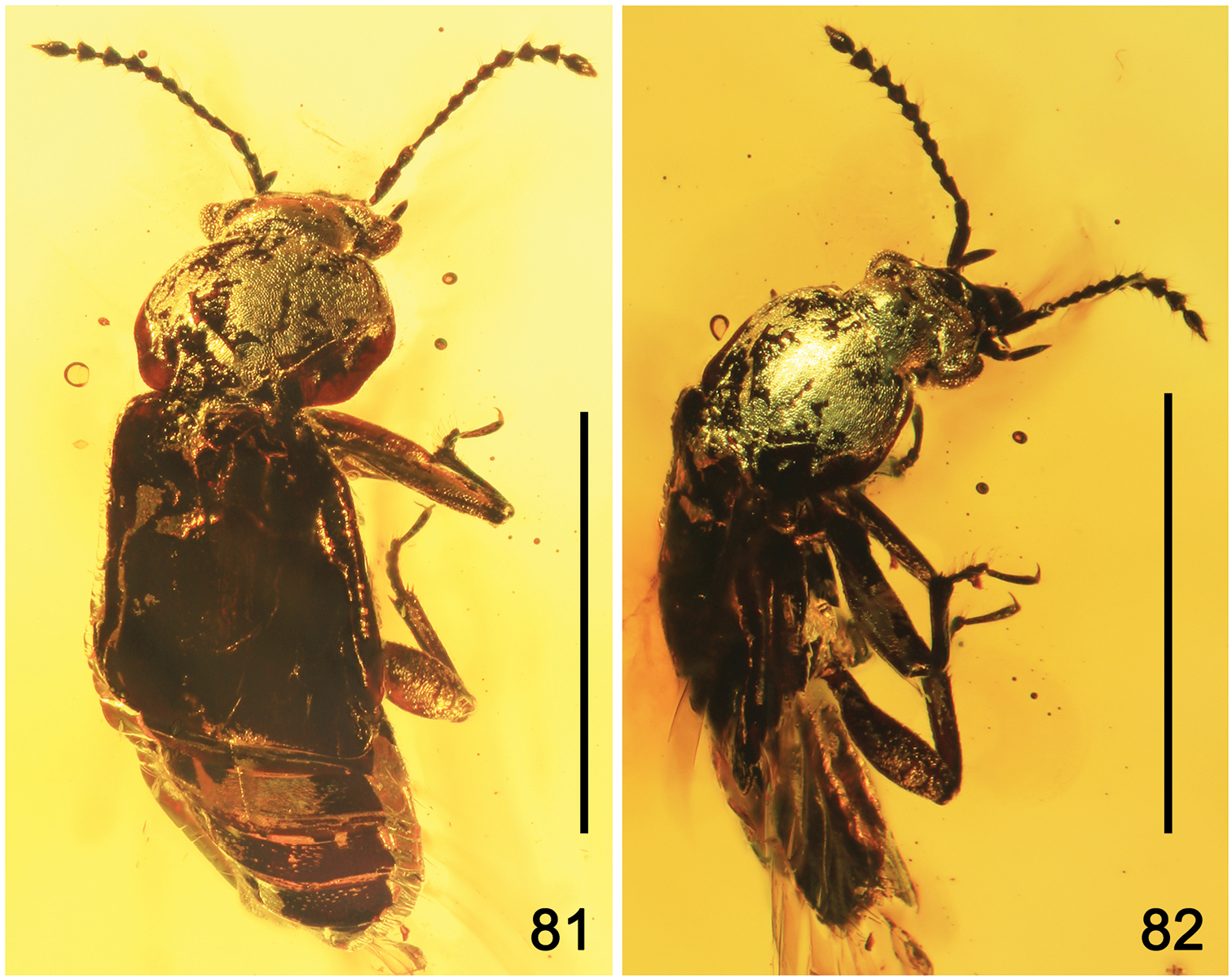 by dating fossils of pollen and beetles