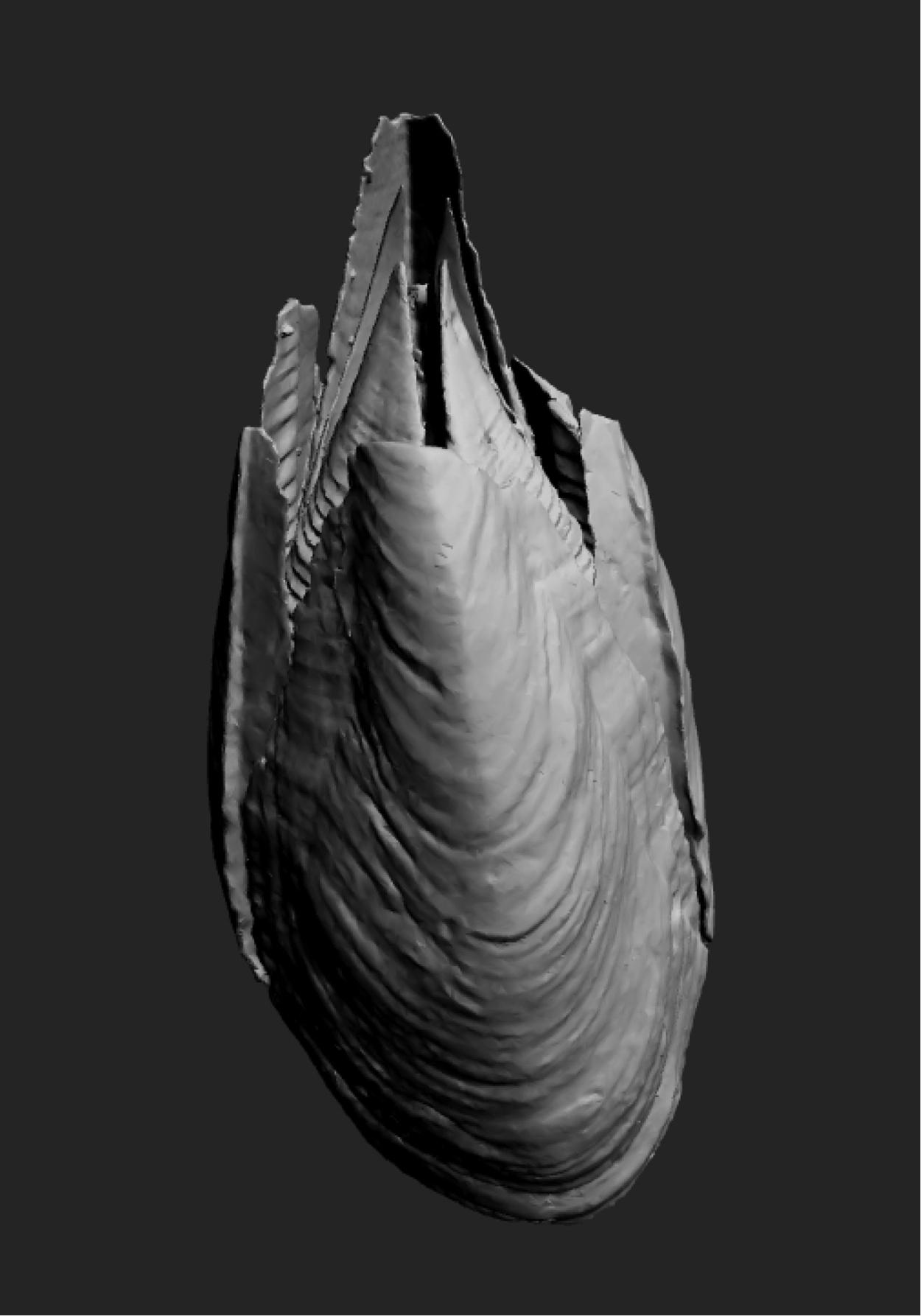 Description of a new species of Membranobalanus (Crustacea