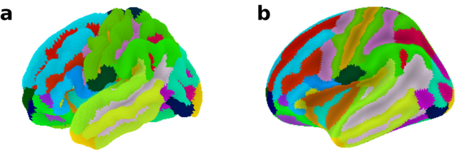 Loading and plotting of cortical surface representations in