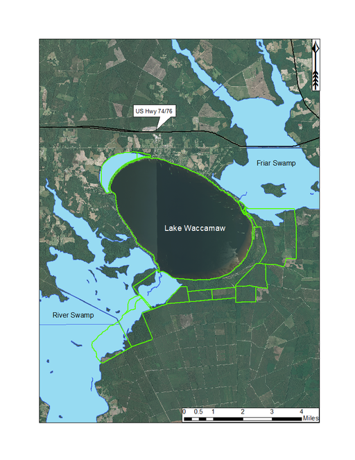 Guide to the littoral zone vascular flora of Carolina bay