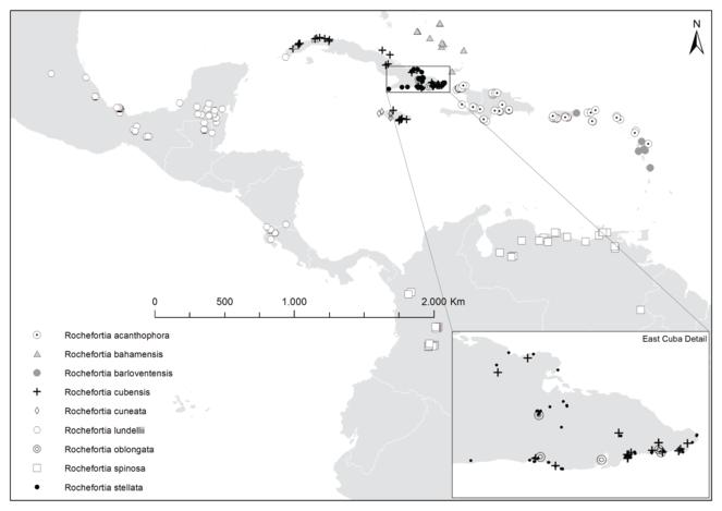 Taxonomic revision of Rochefortia Sw  (Ehretiaceae, Boraginales)